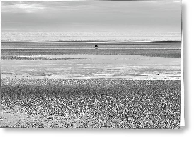 Coastal Brown Bear On  A Beach In Monochrome Greeting Card