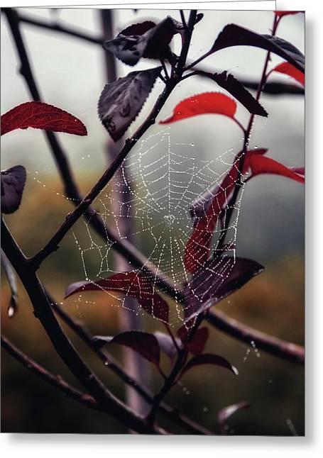 Cobweb Greeting Card