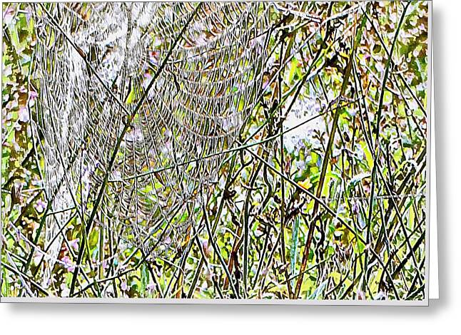 Greeting Card featuring the photograph Cobweb Study 5 by Dorothy Berry-Lound