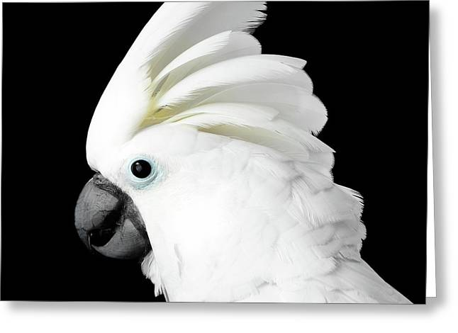 Cockatoo Alba Greeting Card