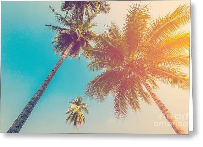 Coconut Palm Tree With Vintage Effect Greeting Card
