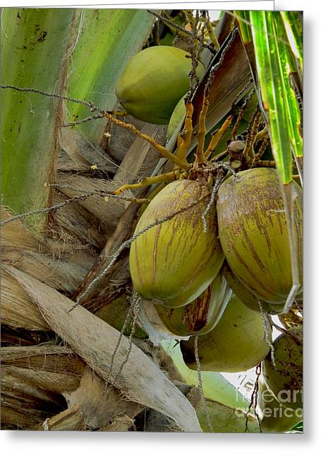 Top Deck Coconut Greeting Card