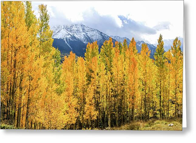 Colorado Aspens And Mountains 1 Greeting Card