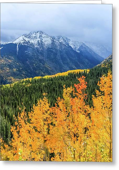 Colorado Aspens And Mountains 4 Greeting Card