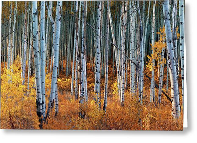 Colorado Autumn Wonder Panorama Greeting Card