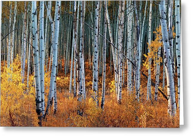 Colorado Autumn Wonder Panorama Greeting Card