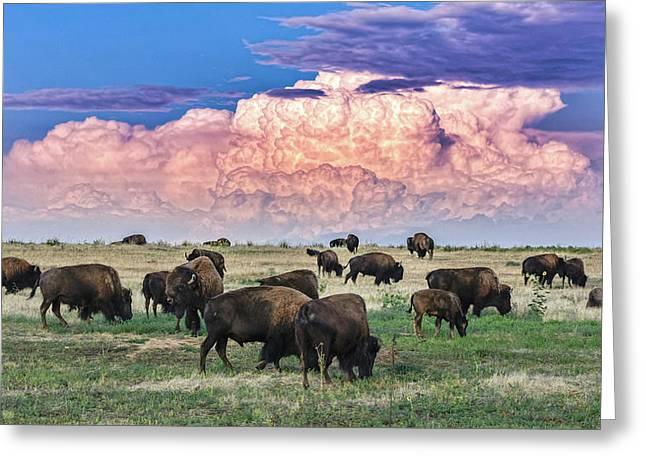 Colorado Bison Greeting Card
