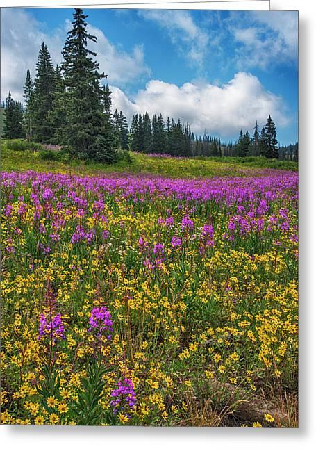 Colorado Purple Lupine Near Steamboat Springs Greeting Card