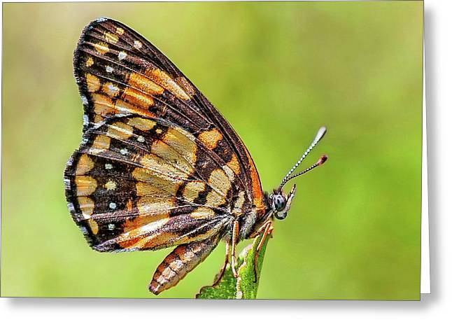 Greeting Card featuring the photograph Colorful Butterfly by Anthony Dezenzio