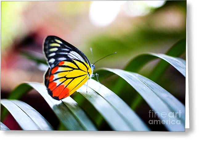Colorful Butterfly Resting On The Palm Greeting Card