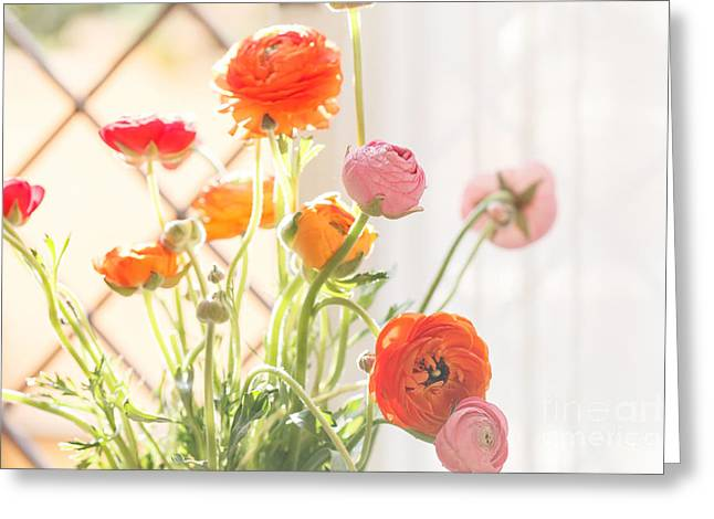 Colorful Persian Buttercup Flowers Greeting Card