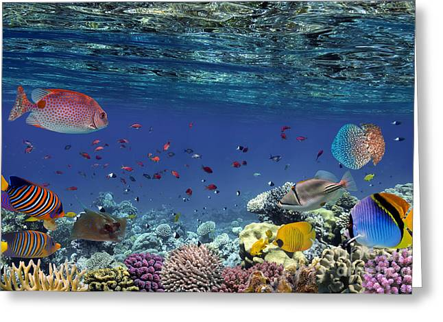 Colorful Reef Underwater Landscape With Greeting Card