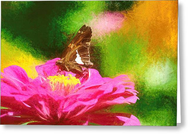 Colorful Silver Spotted Skipper Butterfly Greeting Card