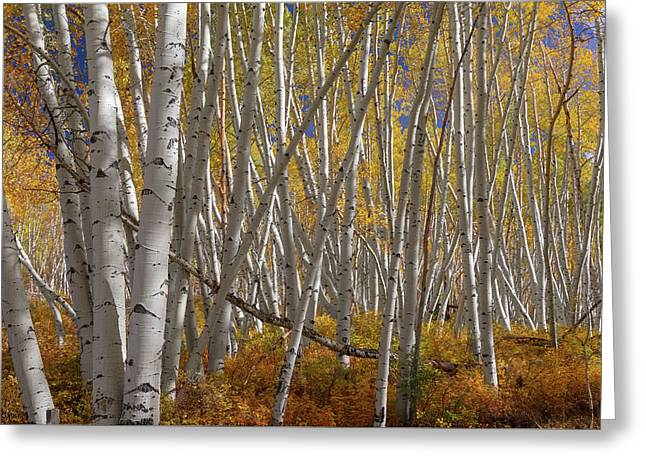Greeting Card featuring the photograph Colorful Stick Forest by James BO Insogna