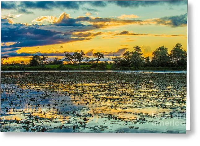 Colorful Sunset In Pantanal, Brazil Greeting Card