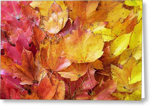 Colors Of Fall - Red To Yellow Greeting Card