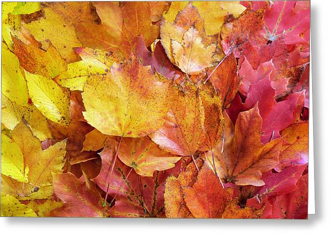 Colors Of Fall - Yellow To Red Greeting Card