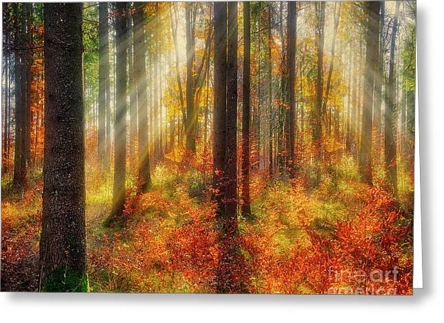 Greeting Card featuring the photograph Colours Of Nature 02 by Edmund Nagele