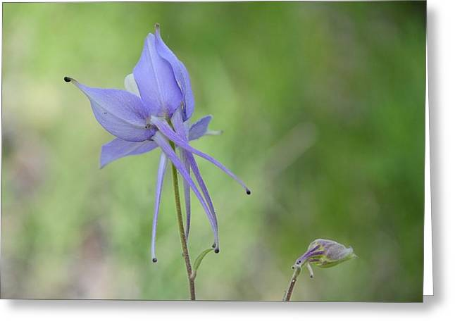 Columbine Details Greeting Card