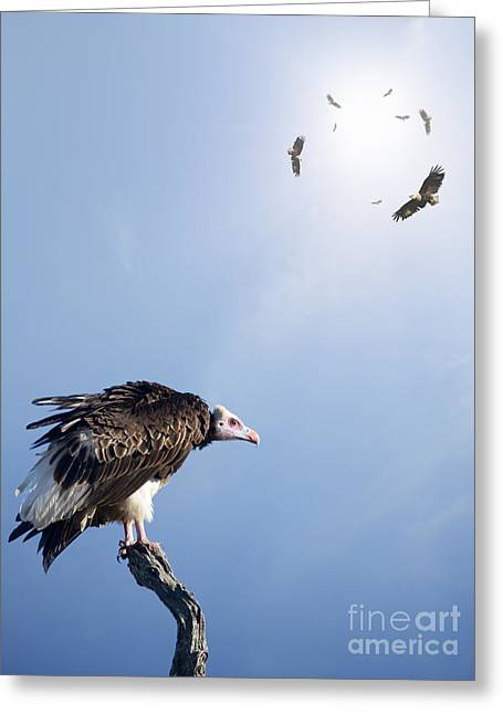 Conceptual - Vultures Waiting To Prey Greeting Card