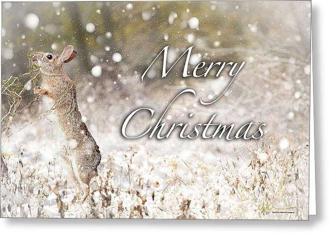 Conttontail Christmas Greeting Card