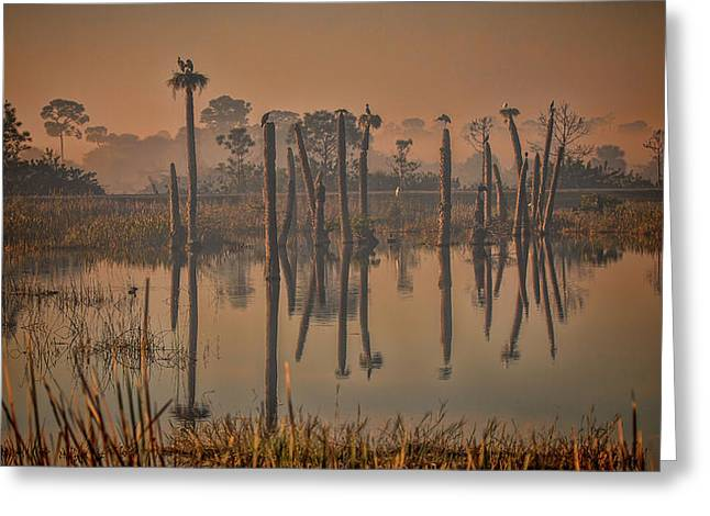 Cool Day At Viera Wetlands Greeting Card
