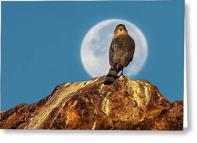 Coopers Hawk With Moon Greeting Card