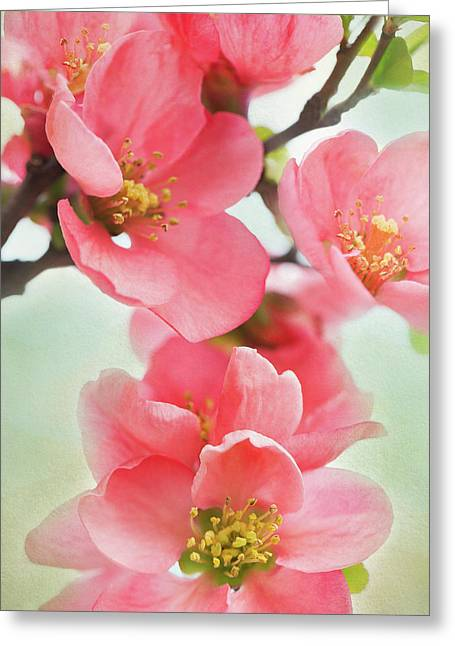 Coral Quince Greeting Card