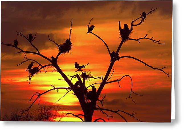 Cormorant Nest Building Time Greeting Card