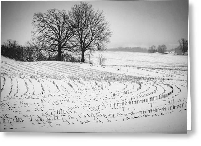 Corn Snow Greeting Card