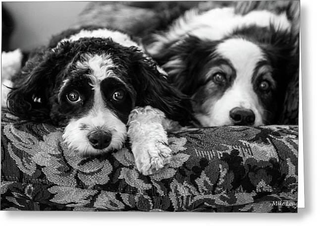 Couch Potatoes Greeting Card