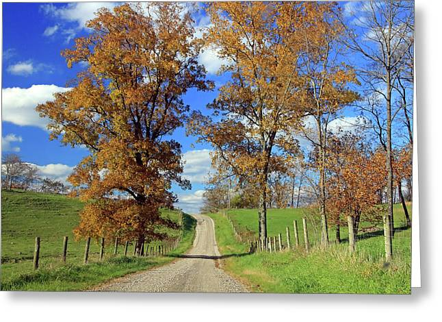 Greeting Card featuring the photograph Country Road Through Fall Trees by Angela Murdock