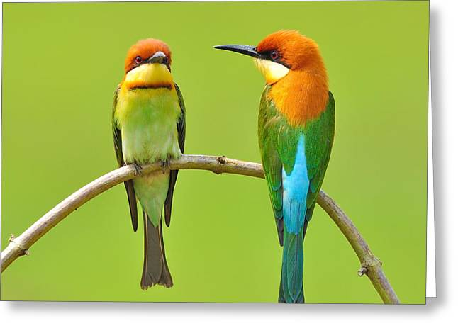 Couple Of Bee Eater Bird Greeting Card