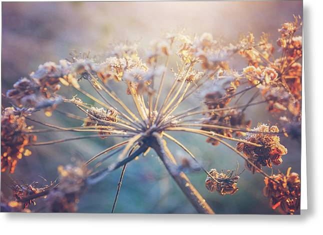 Cow Parsley Winter Frost Greeting Card