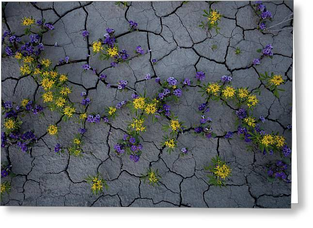 Cracked Blossoms Greeting Card