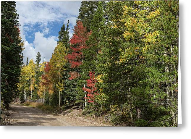 Greeting Card featuring the photograph Cruising Colorado by James BO Insogna
