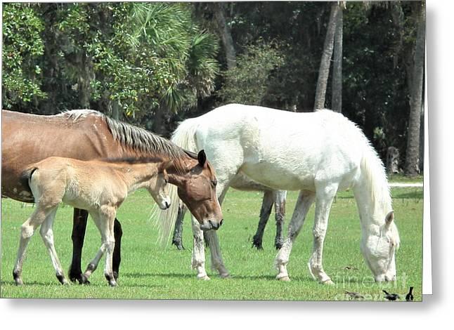 Cumberland Horses Family Portrait Greeting Card