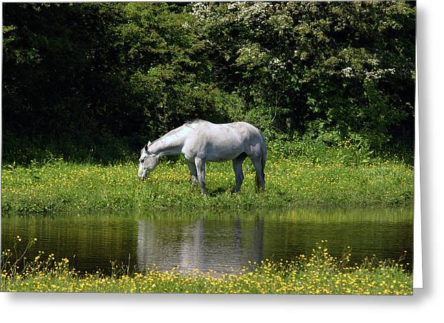 Cumbria. Ulverston. Horse By The Canal Greeting Card