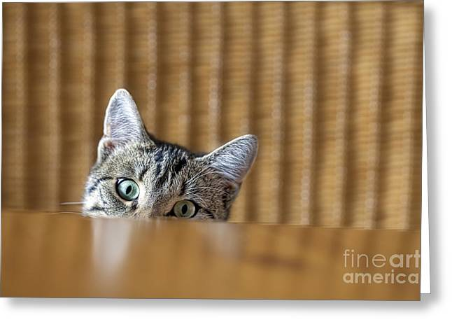 Curious Young Kitten Looking Over A Greeting Card