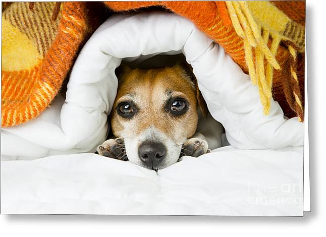 Cute Dog Peeking Out From Under The Greeting Card