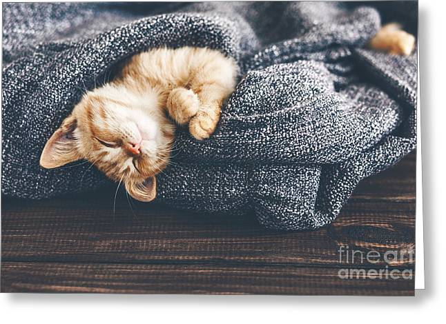 Cute Little Ginger Kitten Is Sleeping Greeting Card