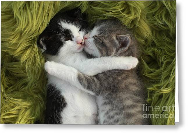 Cute Little Kittens Outdoors In Natural Greeting Card