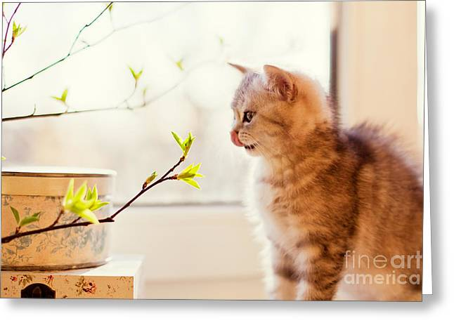 Cute Little Kitty Playing With Green Greeting Card