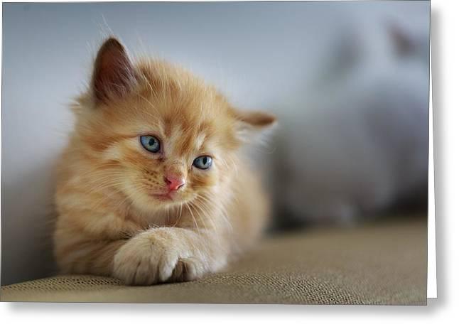 Cute Orange Kitty Greeting Card
