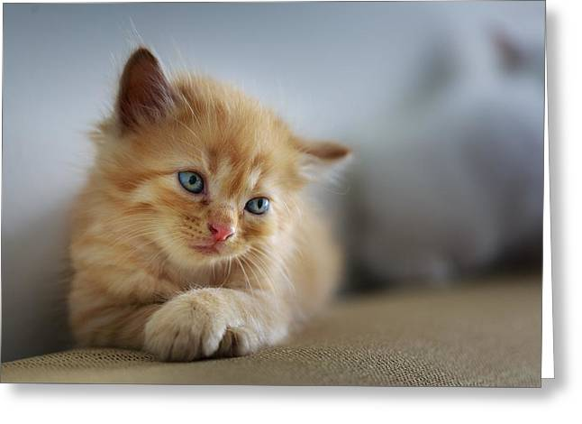 Cute Orange Kitty Greeting Card