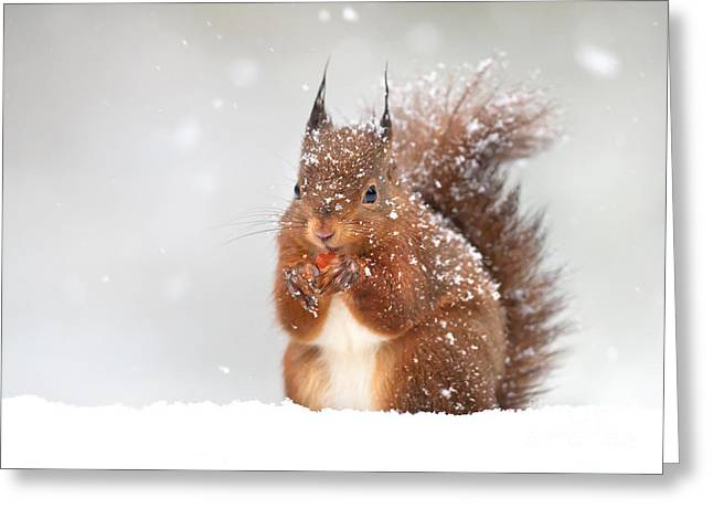 Cute Red Squirrel In The Falling Snow Greeting Card