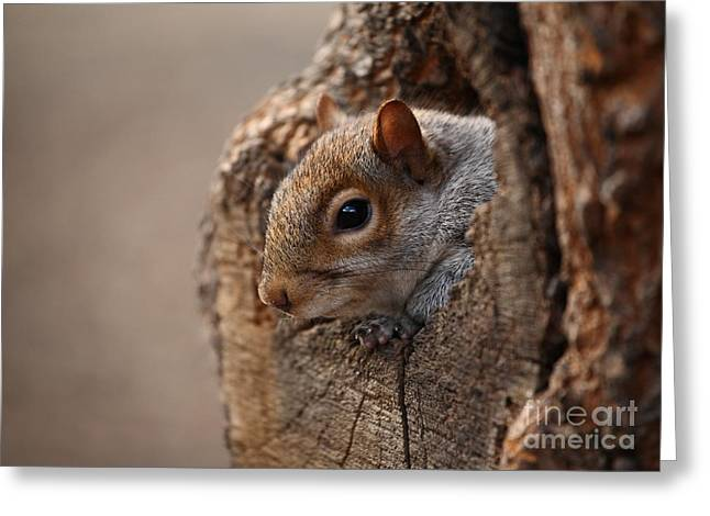 Cute Squirrel Looks Out Of Her Hole Greeting Card