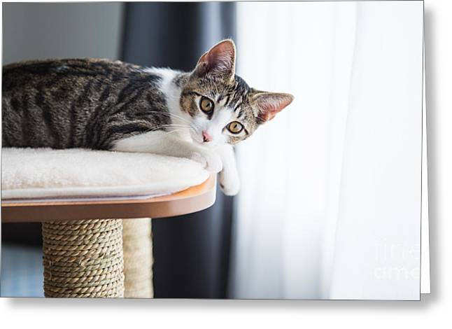 Cute Tabby Kitten Relaxing On Top Of Greeting Card