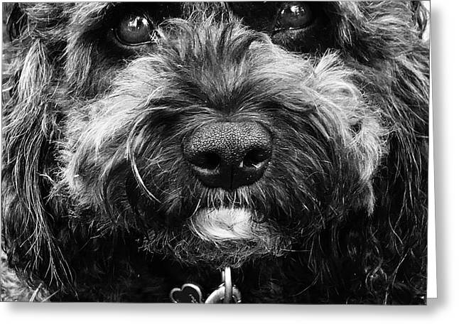 Greeting Card featuring the digital art Cutest Dog On The Planet by Cindy Greenstein