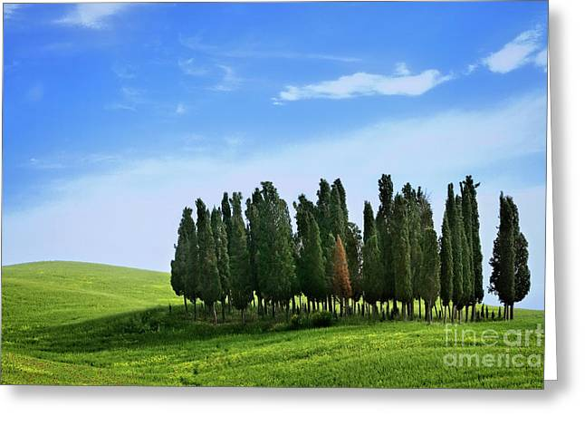 Greeting Card featuring the photograph Cypress Stand by Scott Kemper